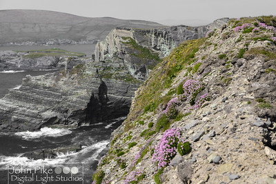 Wildflowers on the Cliffs of Kerry