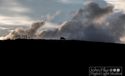 Lone Sheep, Conor Pass