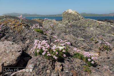Seaside on the Dingle Peninsula