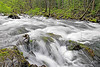 River Rapids,<br /> Western Vancouver Island, British Columbia