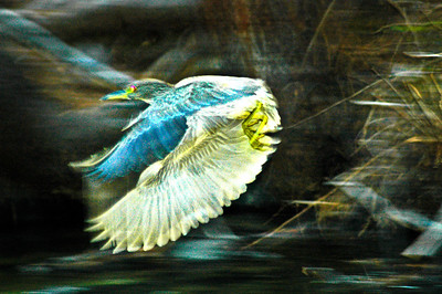 clear bird DSC_0007