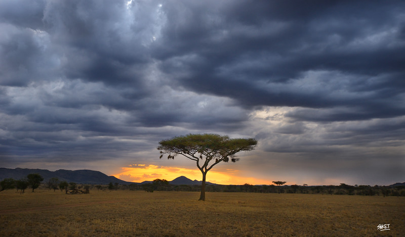 Serengeti Sunrise