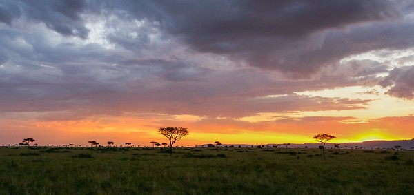 Mara Sunset Panorama