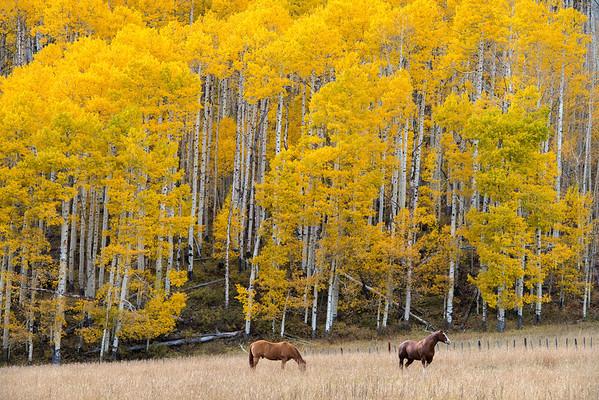 Aspen Horses