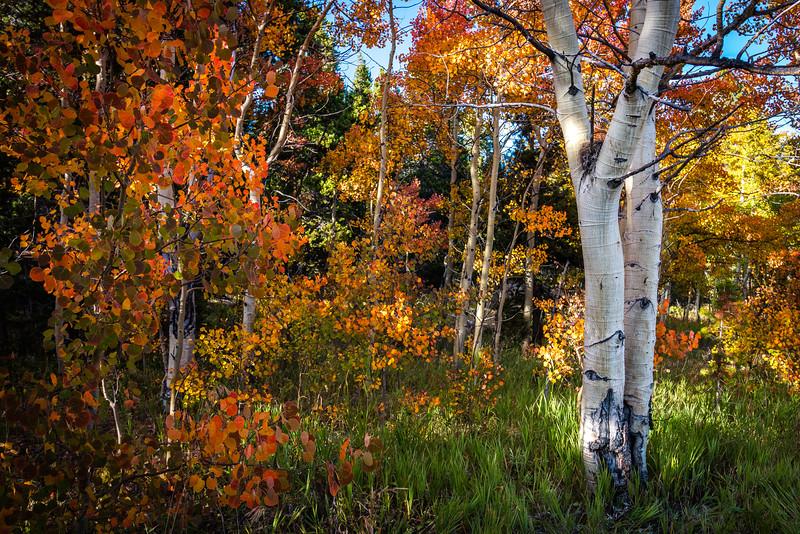 Rainbow Shades of Fall