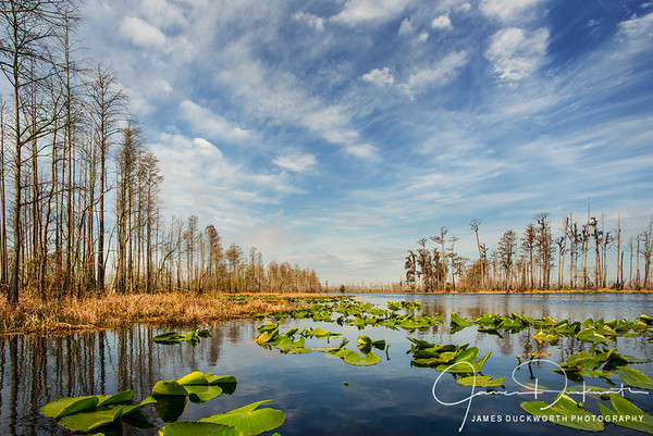 Okefenokee Swamp along the Suwanee River