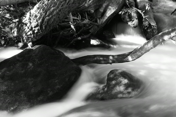 Roots, Rocks, and the Silver Flow. B&W