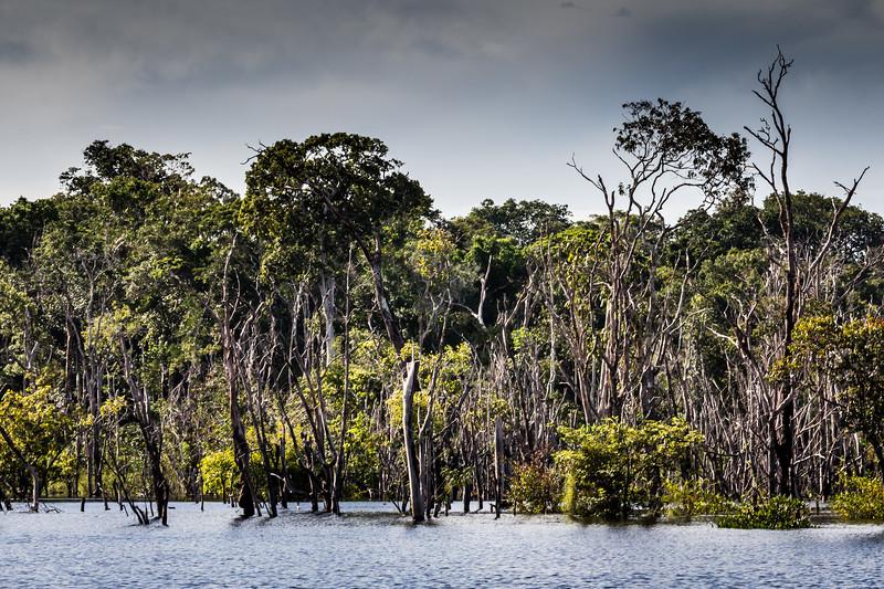 Amazon Jungle - Anavilhanas national park