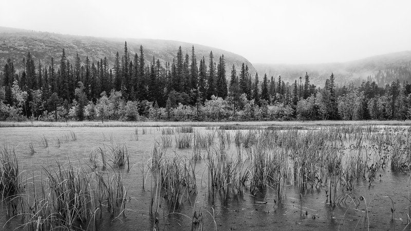 Water, forest and mountain - Fulufjället national park