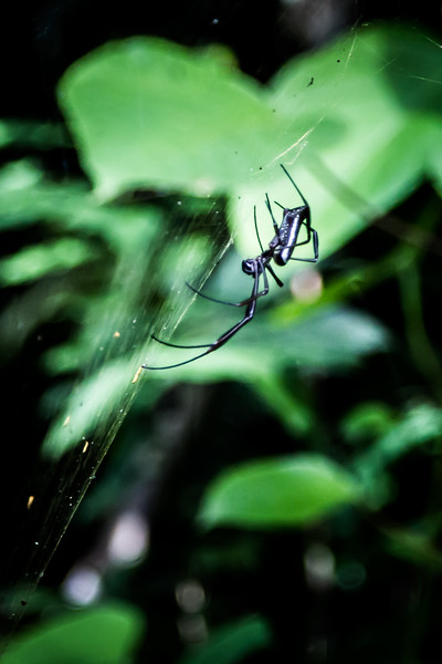 Spider in the Amazon jungle