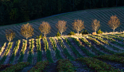 Autumn picture from the strawberry field, just before the sun sets behind a nearby hill