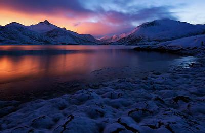 Frozen gold on Lofoten