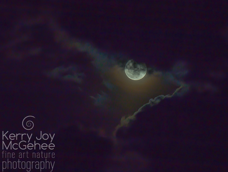 Full Cold Moon #4