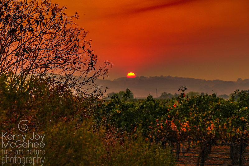 Smoky Sunset Sky Over the Vineyard