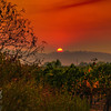 Smoky Sunset Sky Over the Vineyard