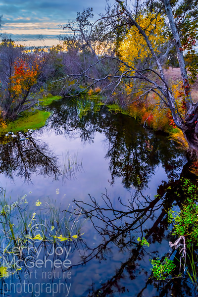 Reflection at Sycamore Creek