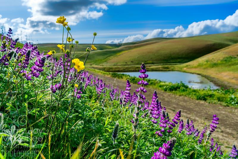 Wildflower Hillside