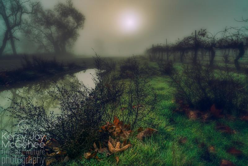 Foggy Vineyard Pond