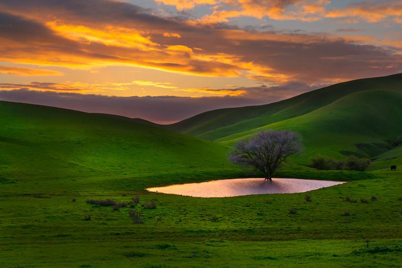 Morgan Territory Mauve Sunset