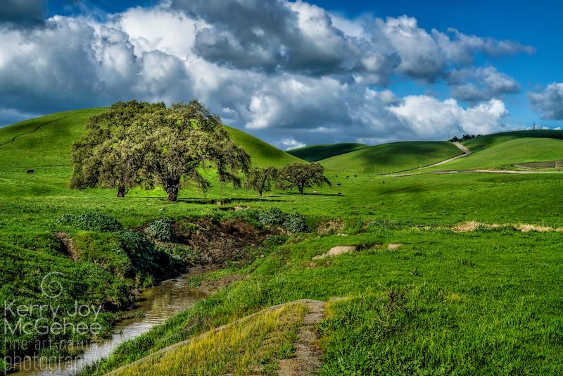 Collier Canyon Oak View