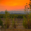 Orange Vineyard Sky
