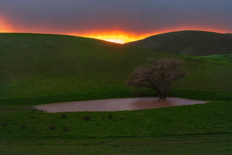 Last Light at the Tree