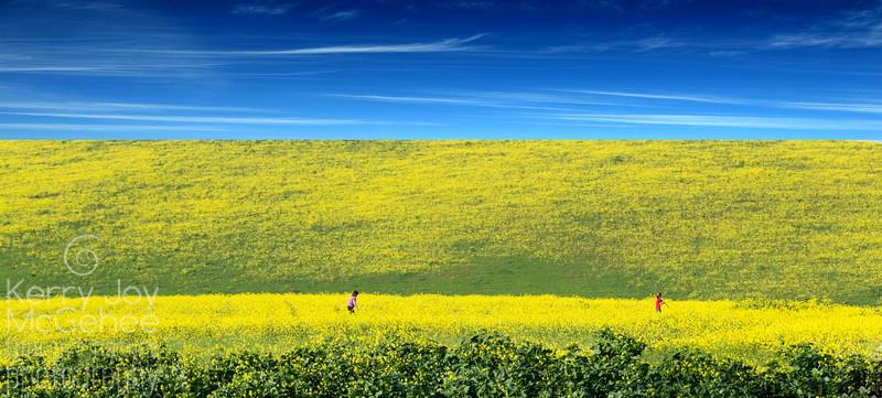 Mustard Field of Dreams