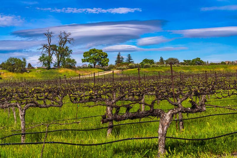 Lenticular Clouds over Vines