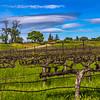 Lenticular Clouds over Vines