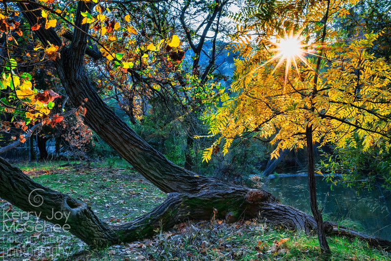 Fall Day at Sycamore Grove