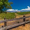 Livermore June Vines