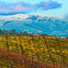 Vineyard with Snowcapped Hills