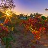 Ravenswood Sunrise