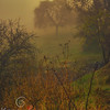 Misty Meadow Sunrise