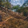 Sunken Valley with Oak Branch