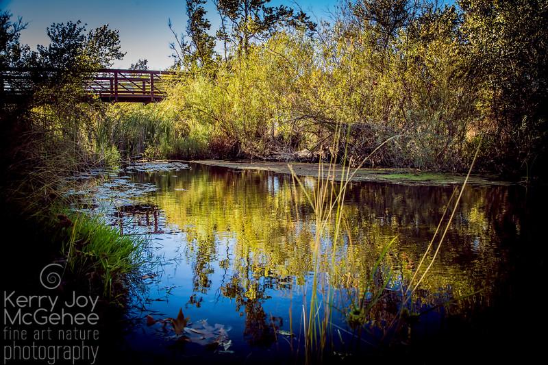 Dreamy Sycamore Bridge