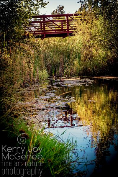 Dreamy Sycamore Bridge II