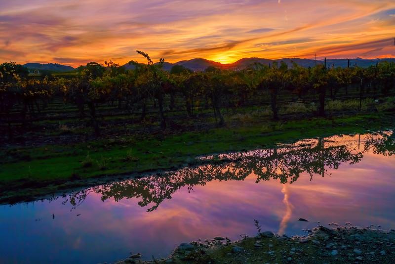 Warm Vineyard Sunset