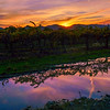 Warm Vineyard Sunset