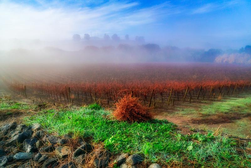 Misty Vines