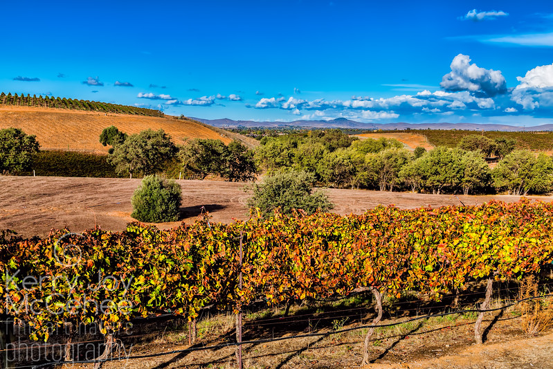 Vineyard View of Brushy Peak