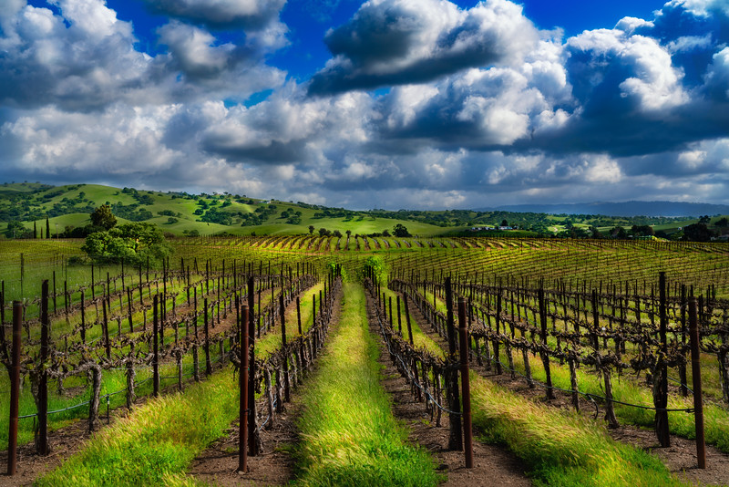 Vineyard Splendor