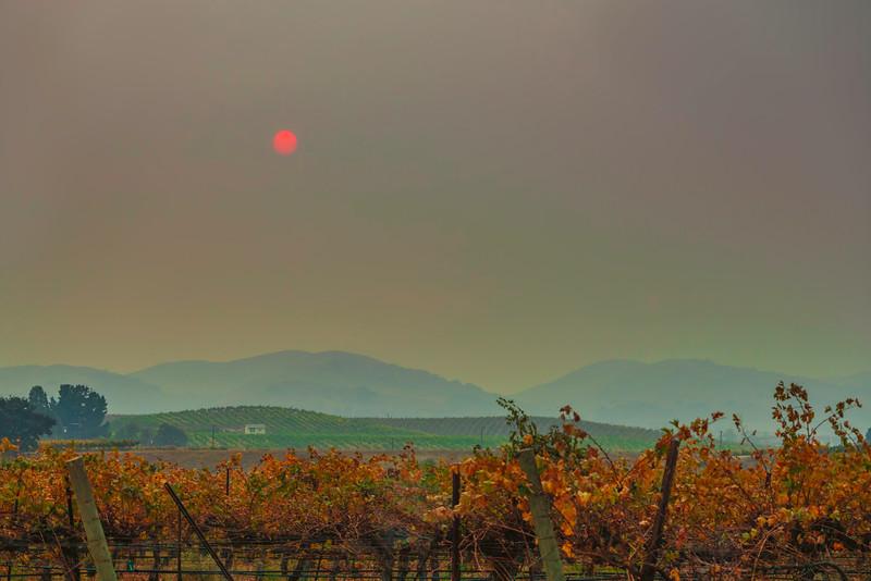 Red Sun Over Vineyard