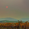 Red Sun Over Vineyard