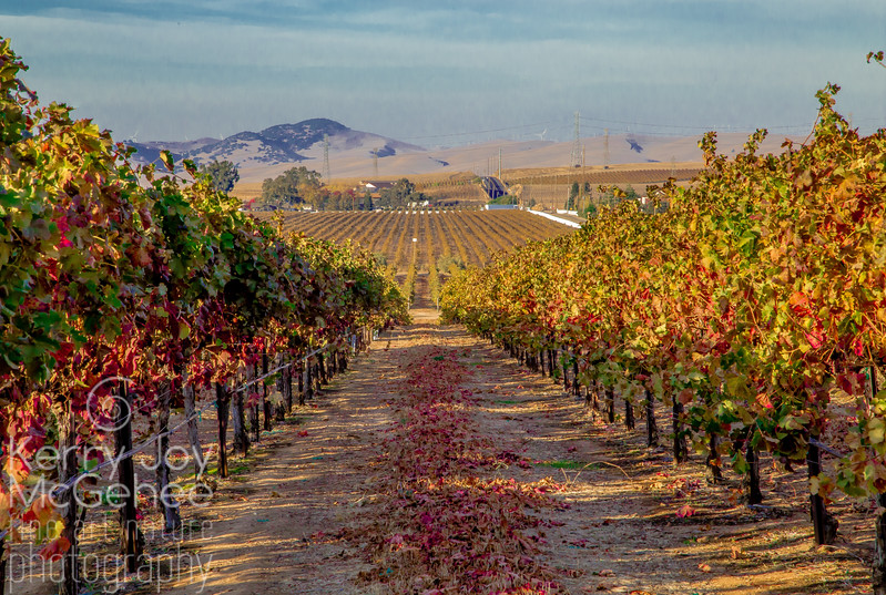 Vineyards at Crane Ridge
