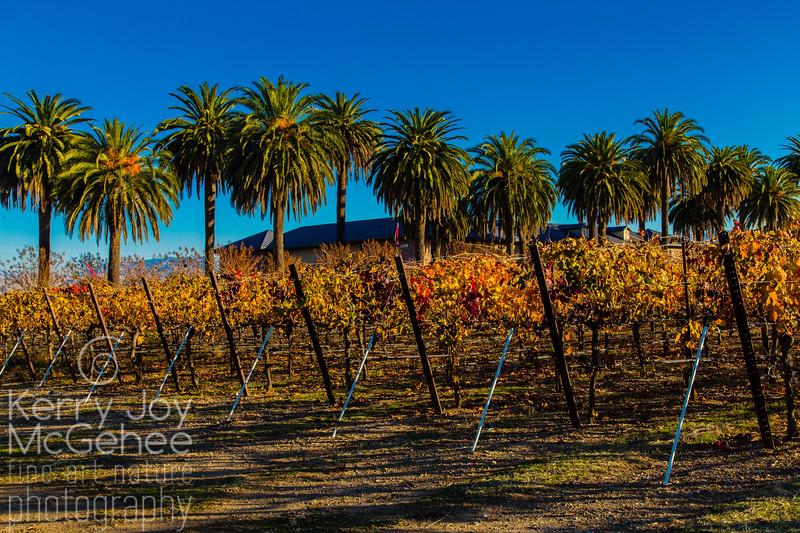 Palms and Vines at Rubino Estates