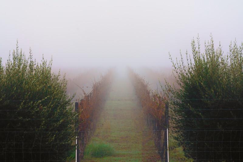 Endless Vines