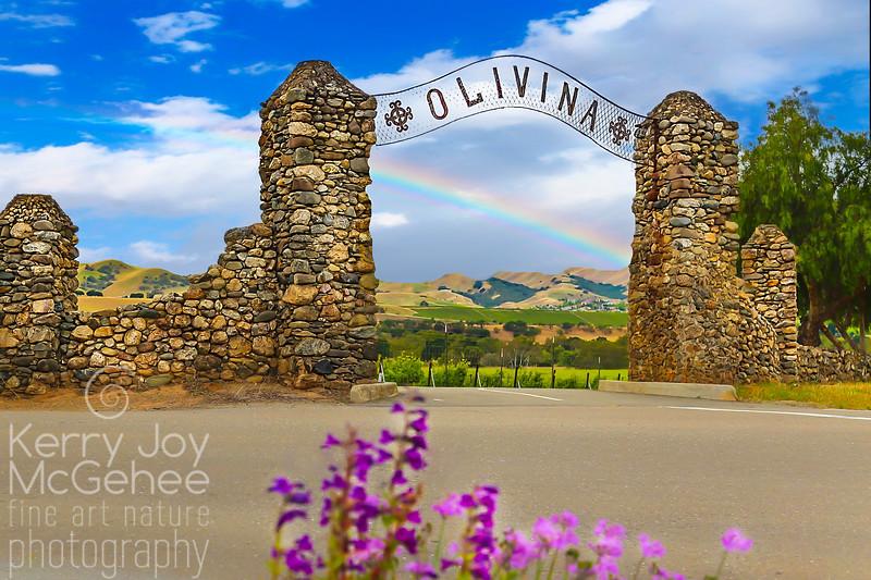Olivina Rainbow