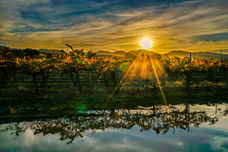 Sunset Vineyard Reflection