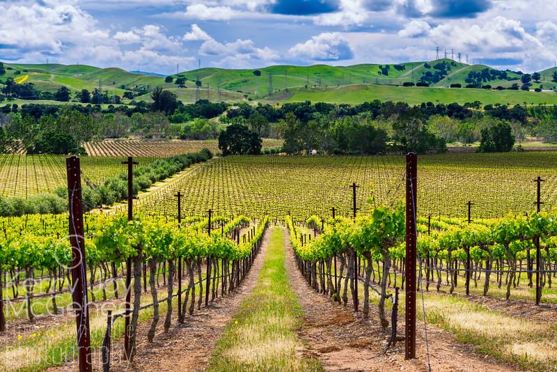 Livermore Valley Vines